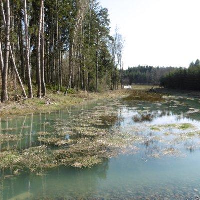 Lesní rybník Jordán (3 km)