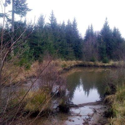 v lese k Výtůni
